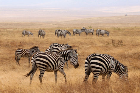 Vacations Magazine: 6 Uncommon Safari Vacations