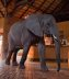 Vacations Magazine: Signature Safari Stays